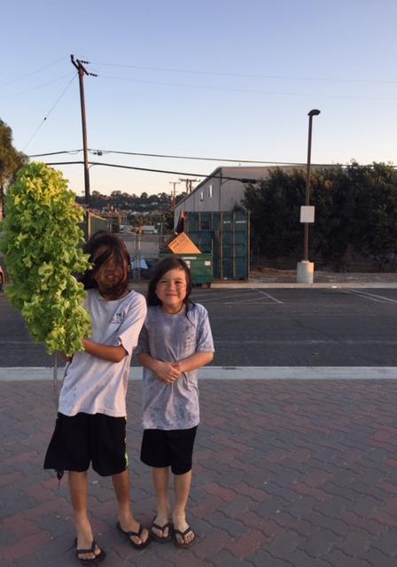 ziggy-rocket-jo-zirocksays-lettuce-tree