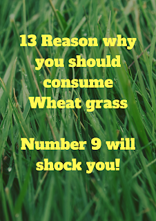 wheatgrass is said to be good for treating heart disease and cancer