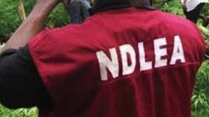NDLEA Impounds 159m Tablets Of Tramadol At Apapa Port  Lagos State.