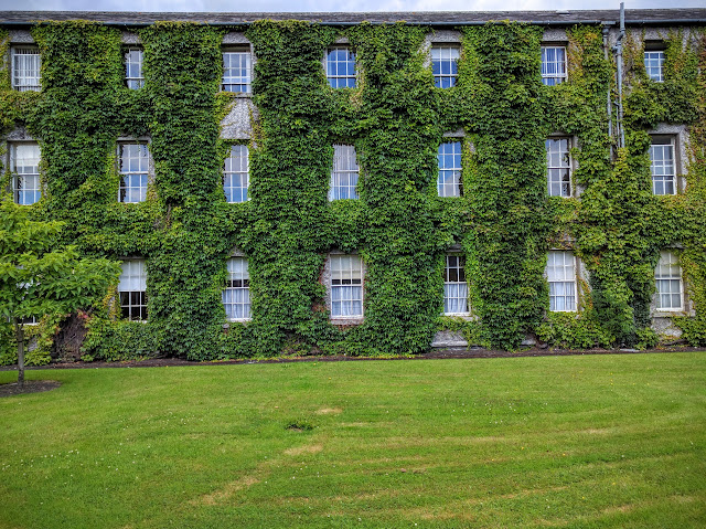 Ivy covered building on the campus of Maynooth University