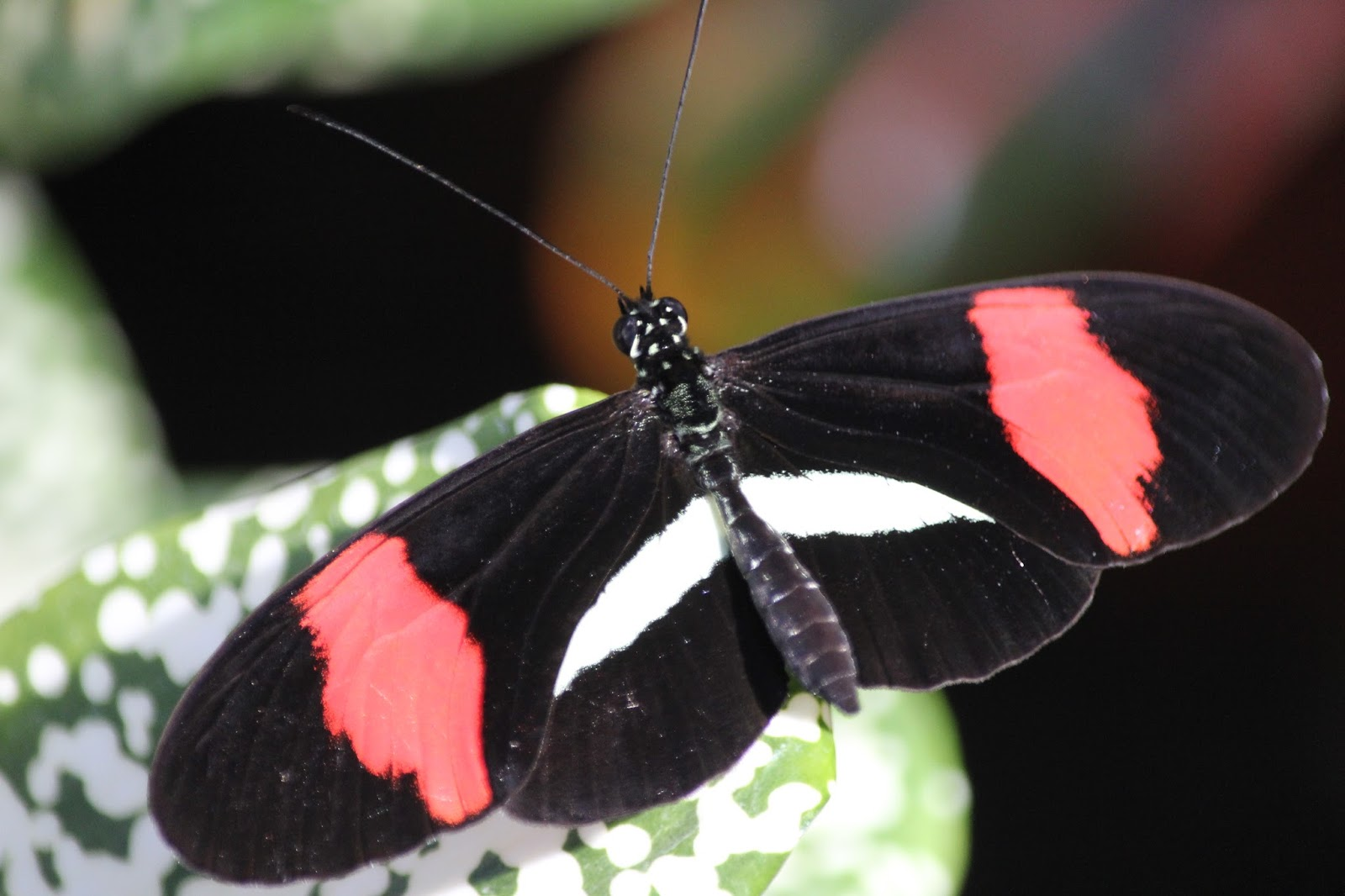 Isabella Conservation District Environmental Education Program Butterflies In Bloom 2017