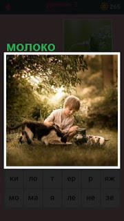 на поляне сидит мальчик и кормит кошку молоком