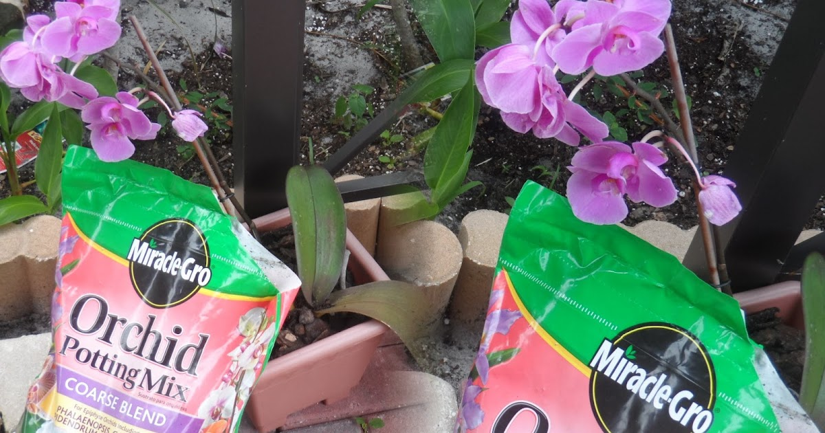 Amiable Amy Using Miracle Gro Orchid Potting Mix