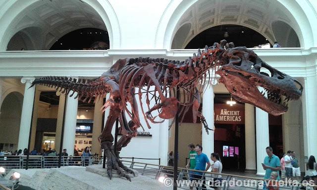 Esqueleto de tiranosaurio Rex mas grande del mundo en el Field Museum. Chicago
