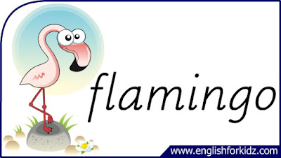 flamingo flashcard