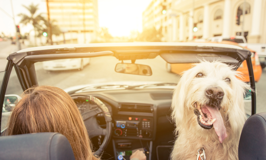 Cheapest Car Insurance Quotes In California For 2018