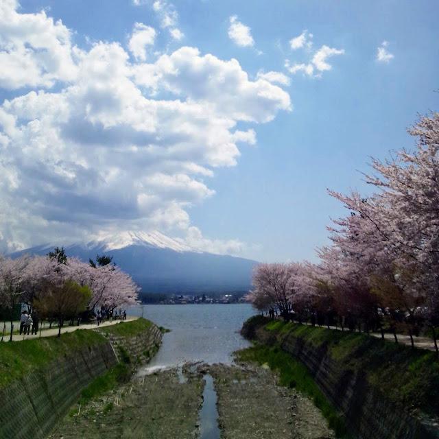 河口湖 桜 富士山