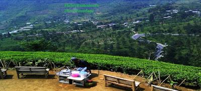Wisata Puncak di Bogor | Tempat Wisata di Bogor