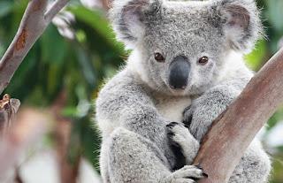 صور صور حيوانات اليفة 2019 خلفيات حيوانات جميلة Dangerous-but-cute-a