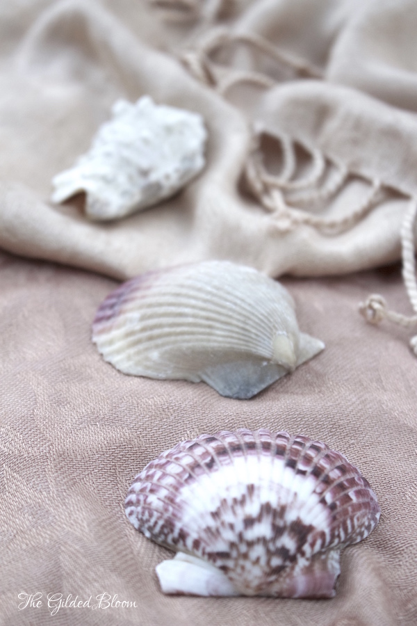 Decorative Shells with Blush and Beige- www.gildedbloom.com