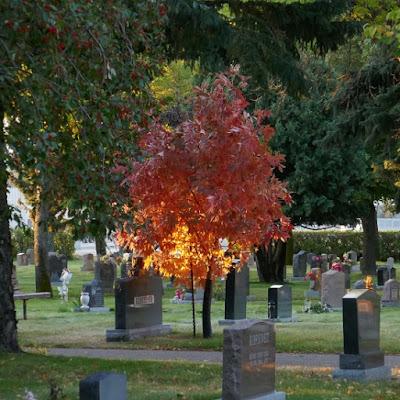 Medicine Hat, Alberta, plants, Ohio, buckeye, tree, cemetery