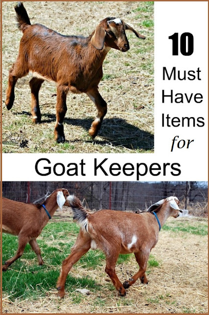 Top ten basic equipment items for new goat owners.