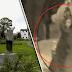 Τρομακτική ιστορία - Η Μαυροφορεμένη
