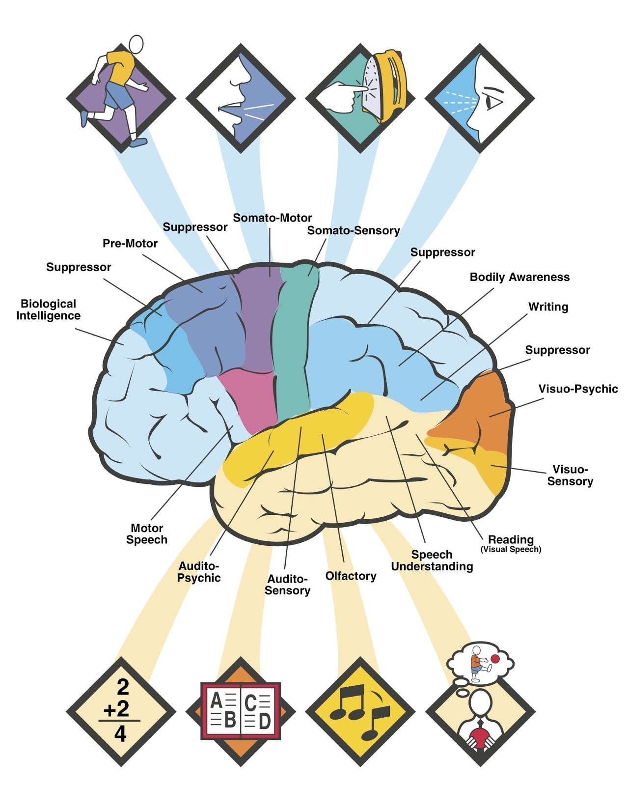 Brain Jack Image Brain Functions Diagram