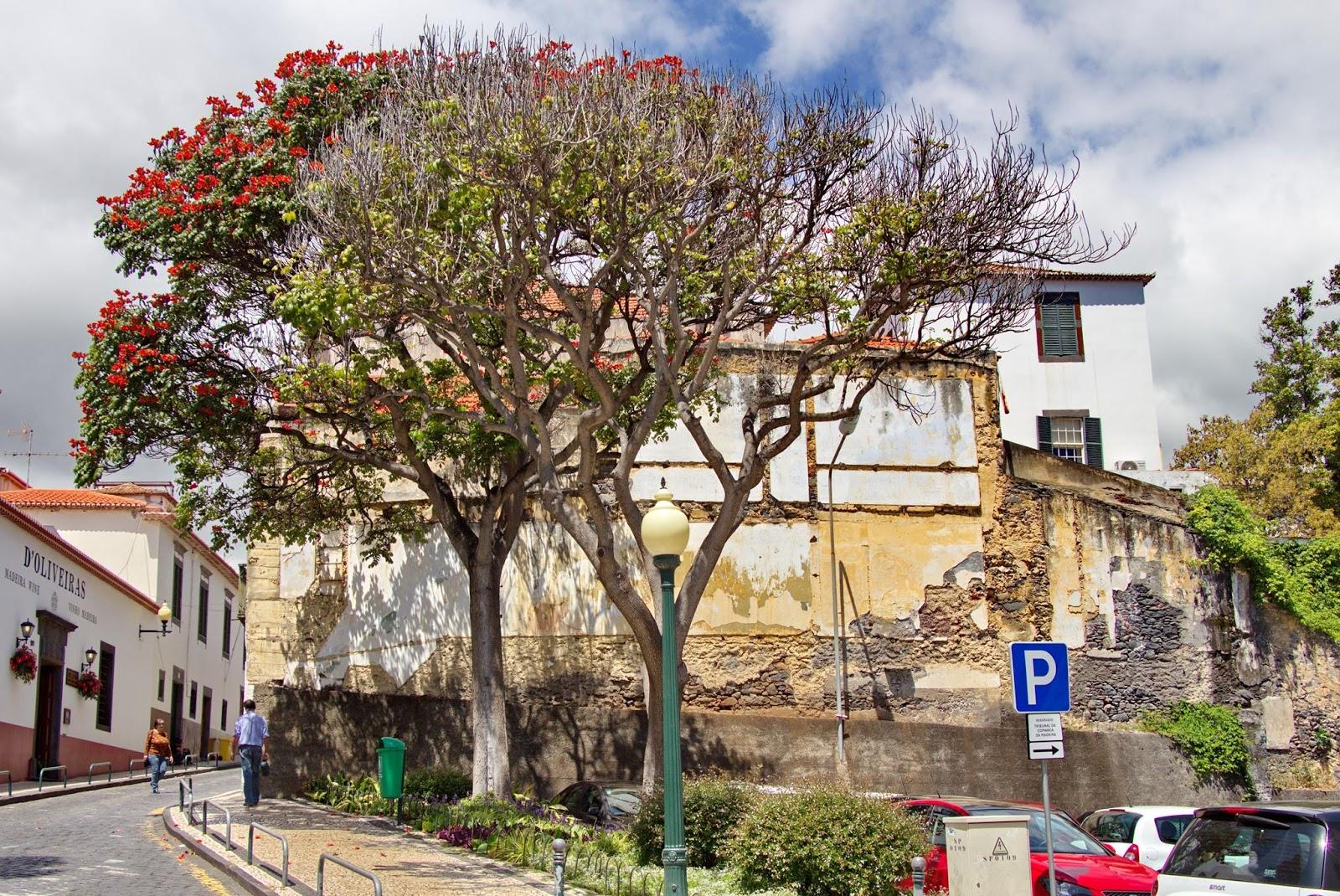 árvores onde já foi um edifício