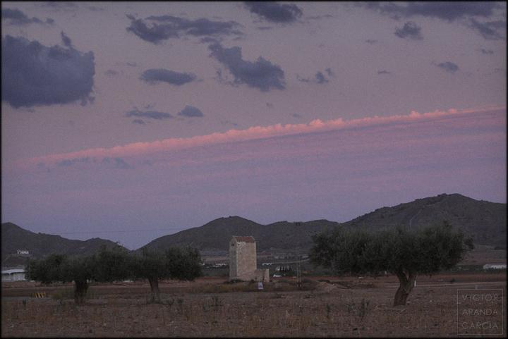 fotografia,murcia,olivos,paisaje,tallante,atardecer