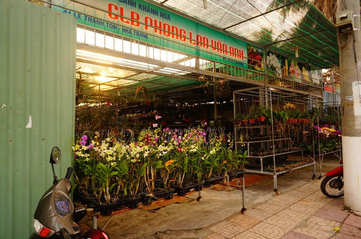Купить-Орхидею-Нячанг