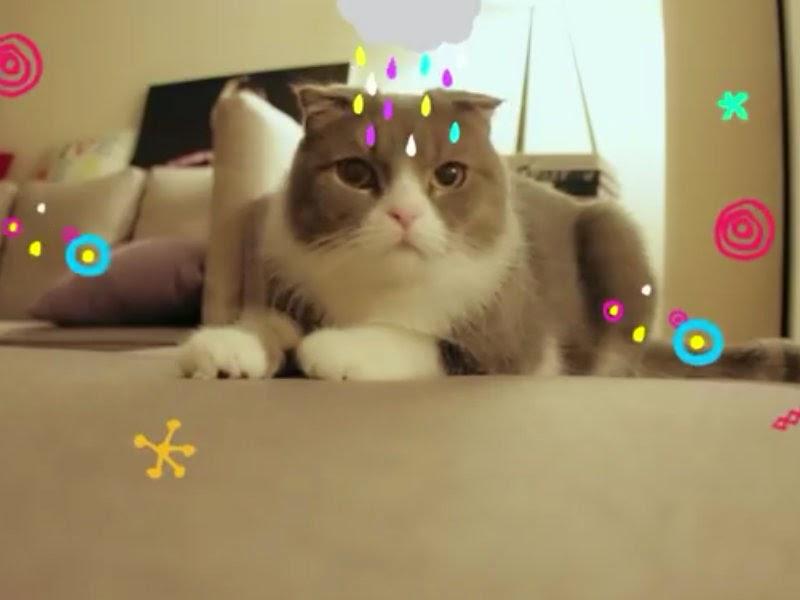 Hara Cat