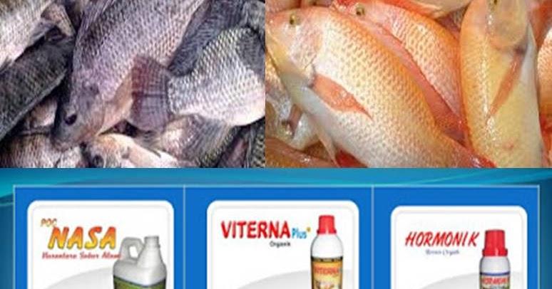 Berikut Yang Bukan Merupakan Ikan Konsumsi Jenis Air Tawar Adalah