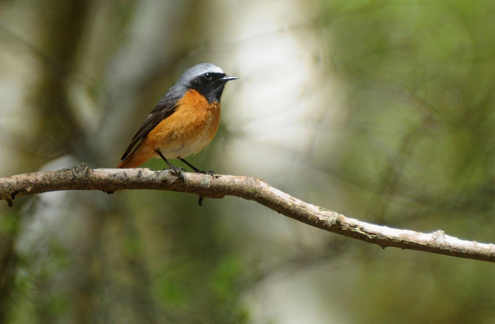 Bird Ringing Hampshire