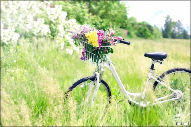 ảnh thiên nhiên và xe đạp đẹp