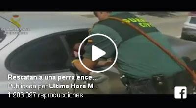 Así liberó la Guardia Civil a una perra encerrada en un coche a pleno sol