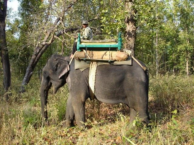 Kanha National Park,Madhya Pradesh