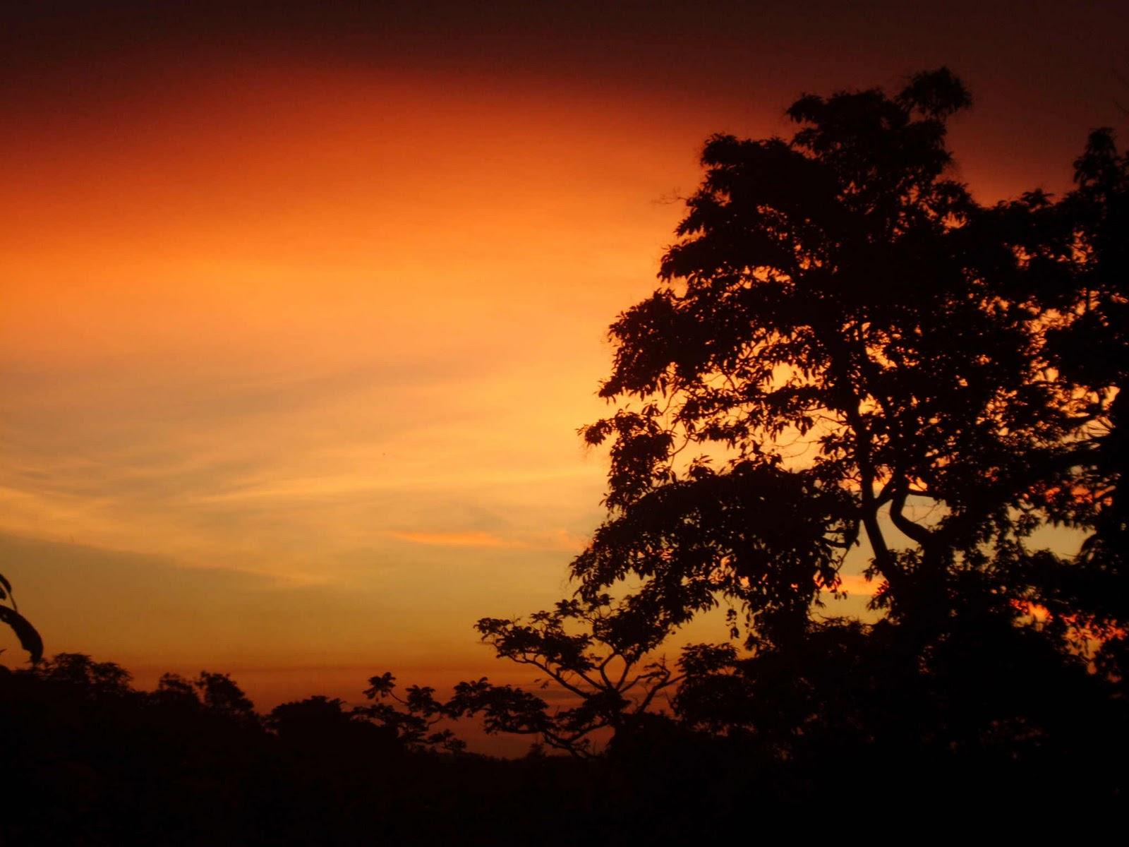 Amazônia e as Cataratas do Iguaçu Fazem Parte das Sete Maravilhas da Natureza