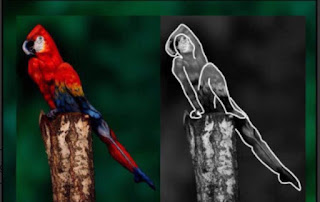 Answer of Beautiful Mind Cracking Parrot Art