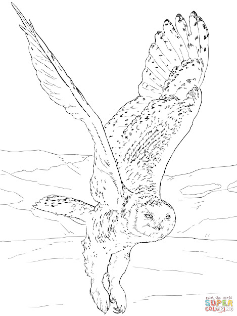 Click The Snowy Owl Coloring Pages To View Printable Version Or Color It  Online Patible With Ipad And Android Tablets