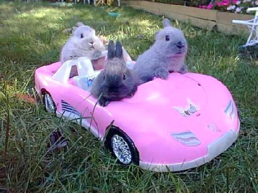 Baby Love Car Seat F