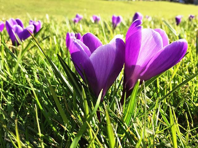 Primavera em Roterdã