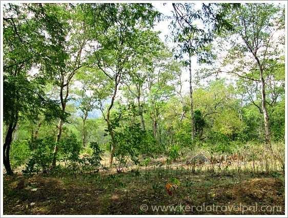 Kerala Travel Pal Picture Blog: Chinnar Wildlife Sanctuary