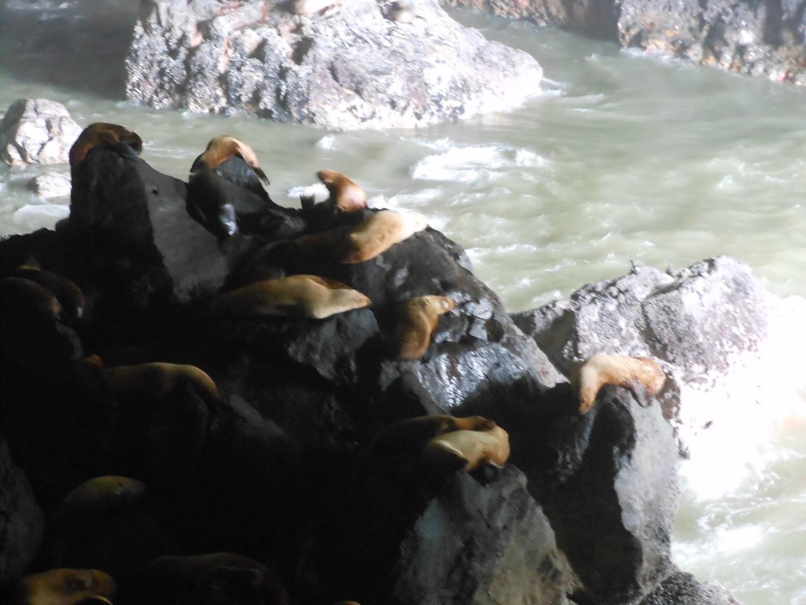 The Accidental Trailerist: Sea Lion Caves