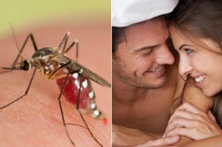Se habla que el Zika puede hacer que la humanidad retroceda dos millones de años
