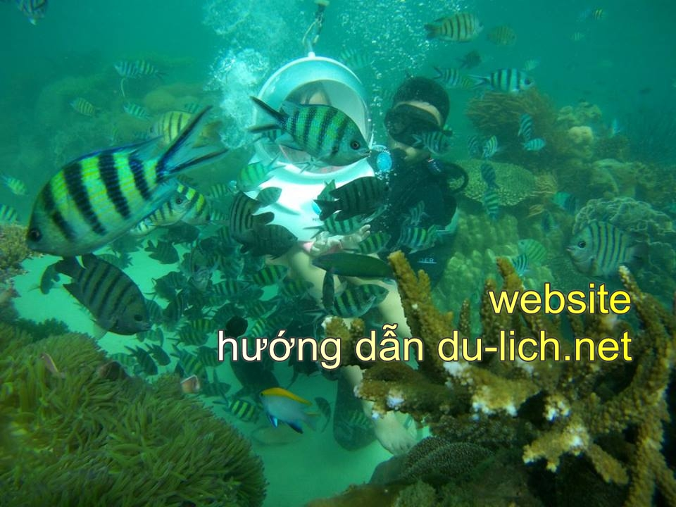 Tour lặn ngắm san hô tại Phú Quốc