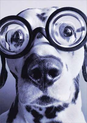 Funny Dalmatian dog glasses
