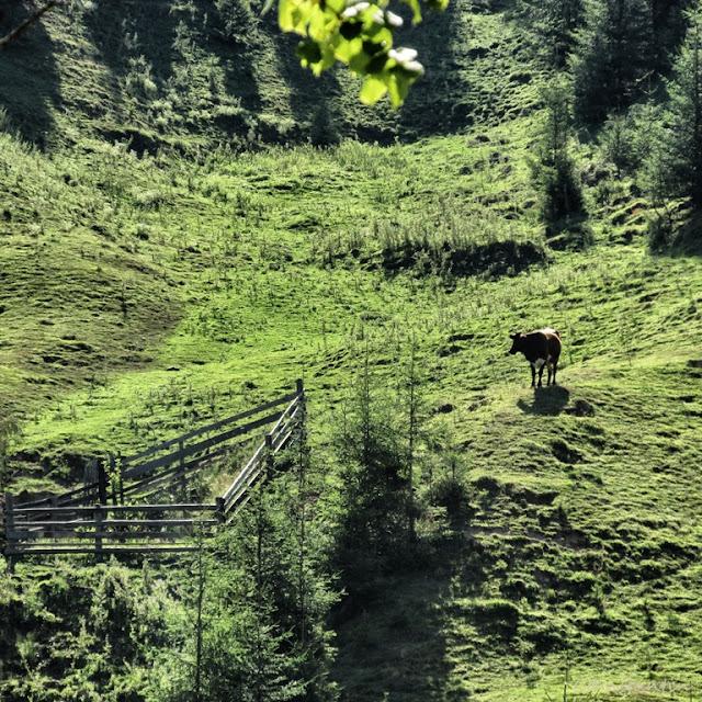 Un gard îndepãrtat care protejeazã un copac tânãr - blog FOTO-IDEEA