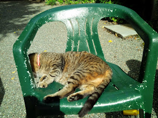 A cat sunbathing on a plastic chair