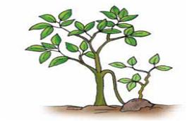 Pengertian dan Macam-Macam Vegetatif Buatan