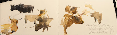 Highland Cow sketches in watercolour and gouache by Shannon Reynolds