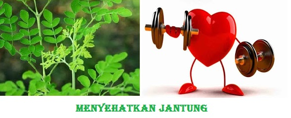 Manfaat Daun Kelor Untuk Kesehatan Jantung