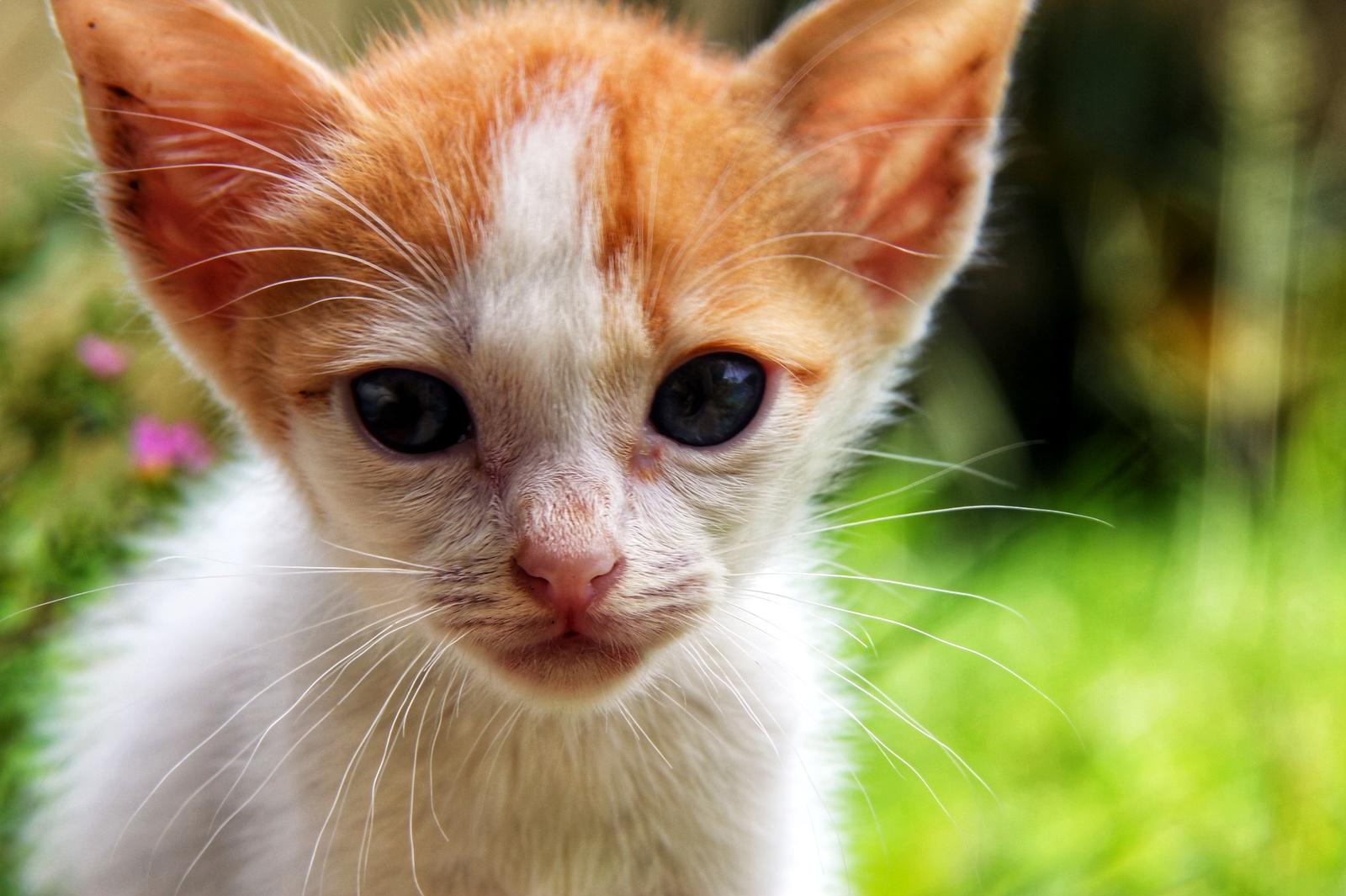 Mengenang Kucing Kesayangan Kami Opet