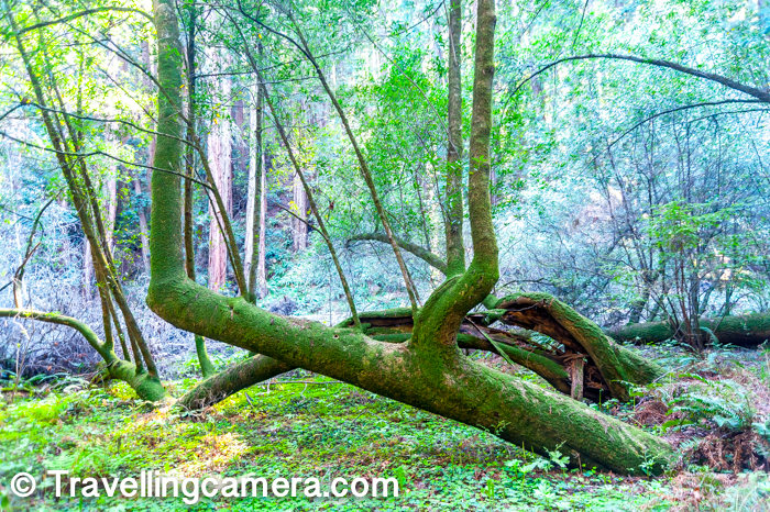 There are some well defined trails which you can follow and explore Muir Woods. It's more about these high trees and some historical events associated with them.