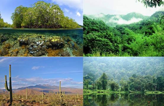 7 Contoh Keanekaragaman Hayati Tingkat Ekosistem