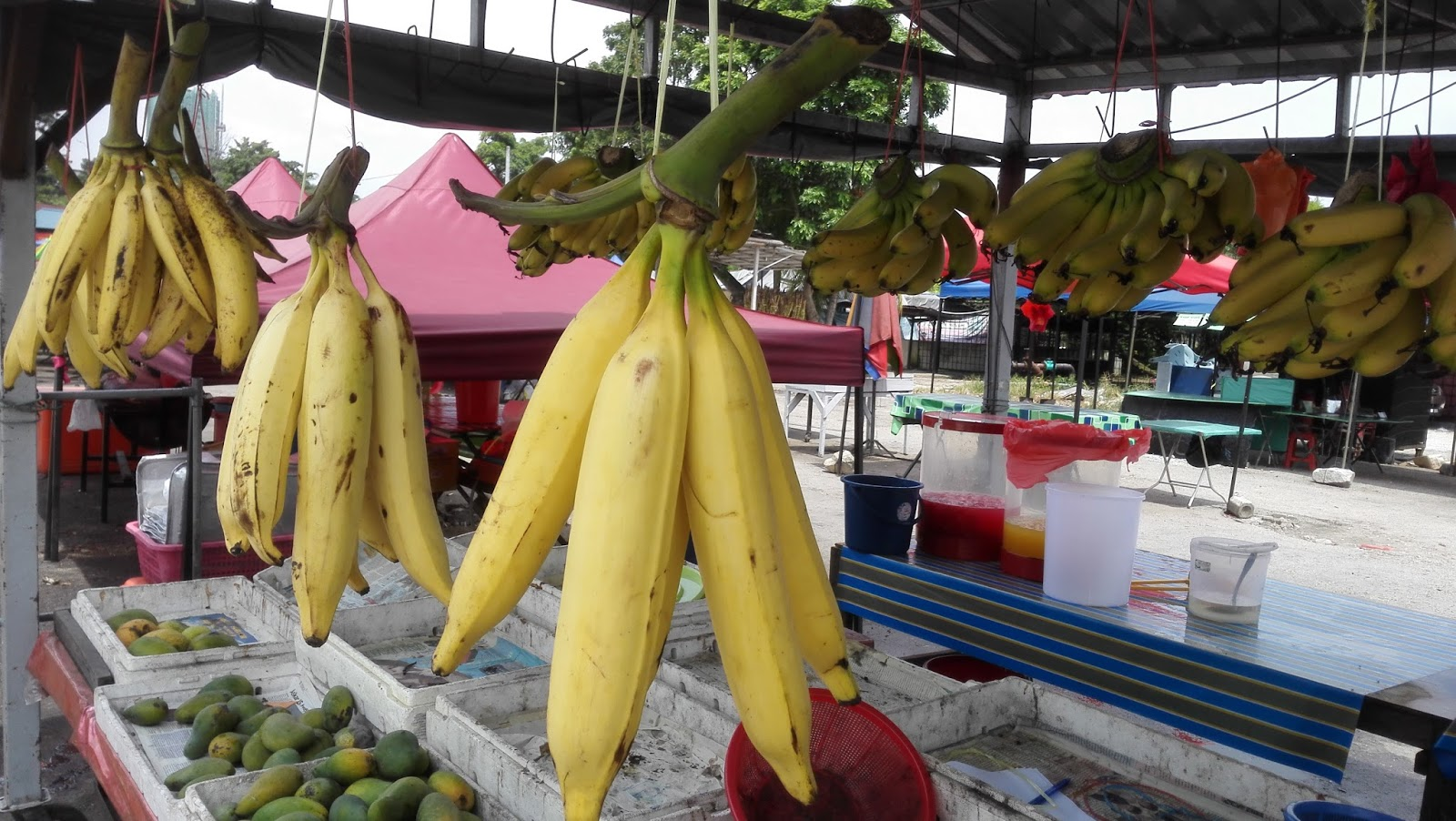 Worlds Biggest Bananas
