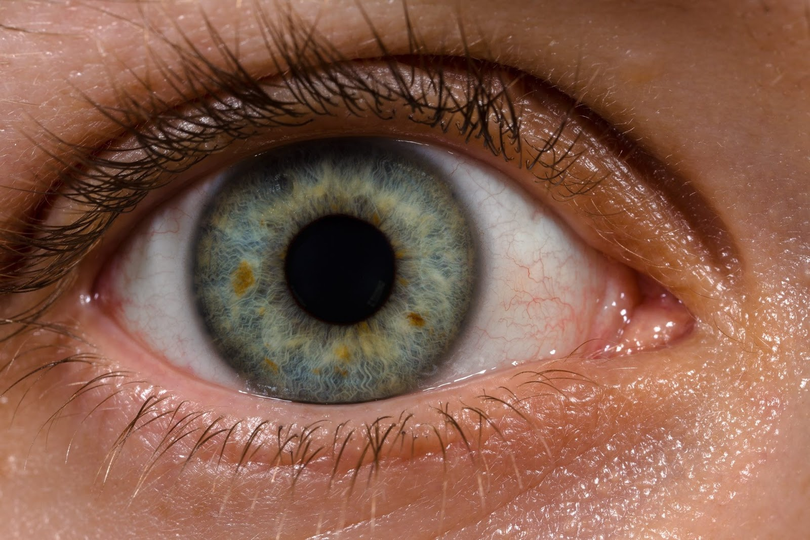 Vista Art Projects Eye Human Iris Patterns Form Shape