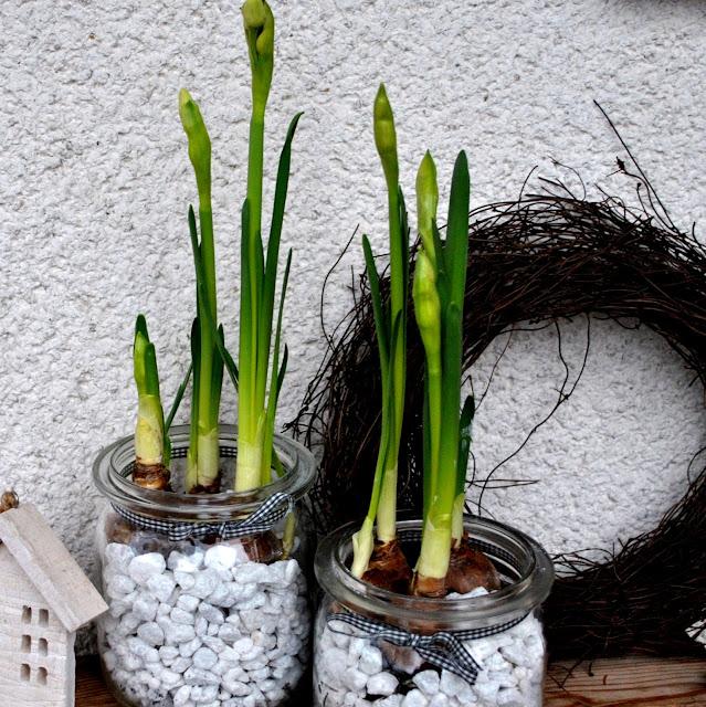 Hol dir den Frühling