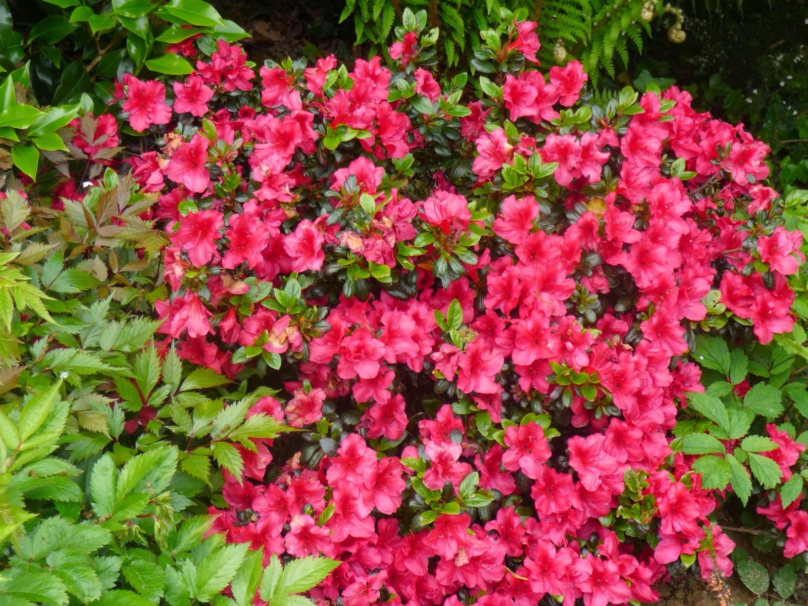 Ma Terre de Bruyère: Des plantes de terre de bruyères, de l ... - Terre De Bruyère Pour Quelle Plante