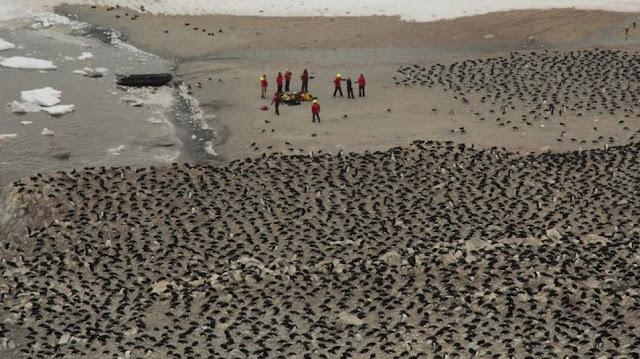 Localizan una colonia desconocida de 1.5 millones de pingüinos en la Antártida